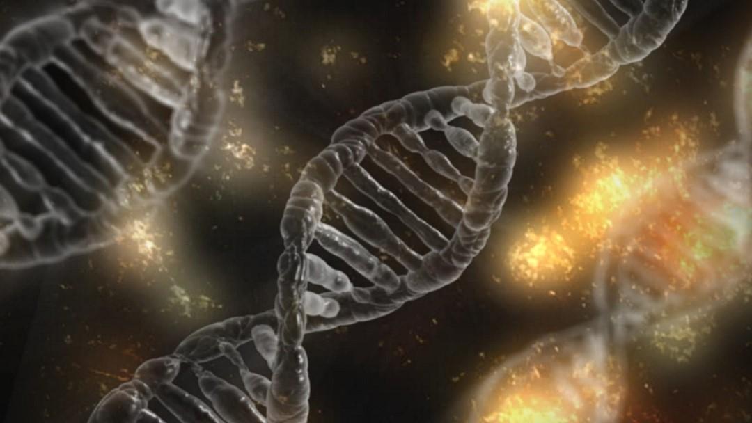 DNA-test betrouwbaar