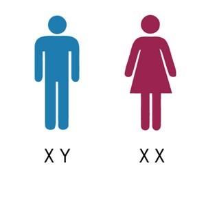 https://www.igene.eu/write/Afbeeldingen1/genderchromosomes2.jpg.ashx?preset=content